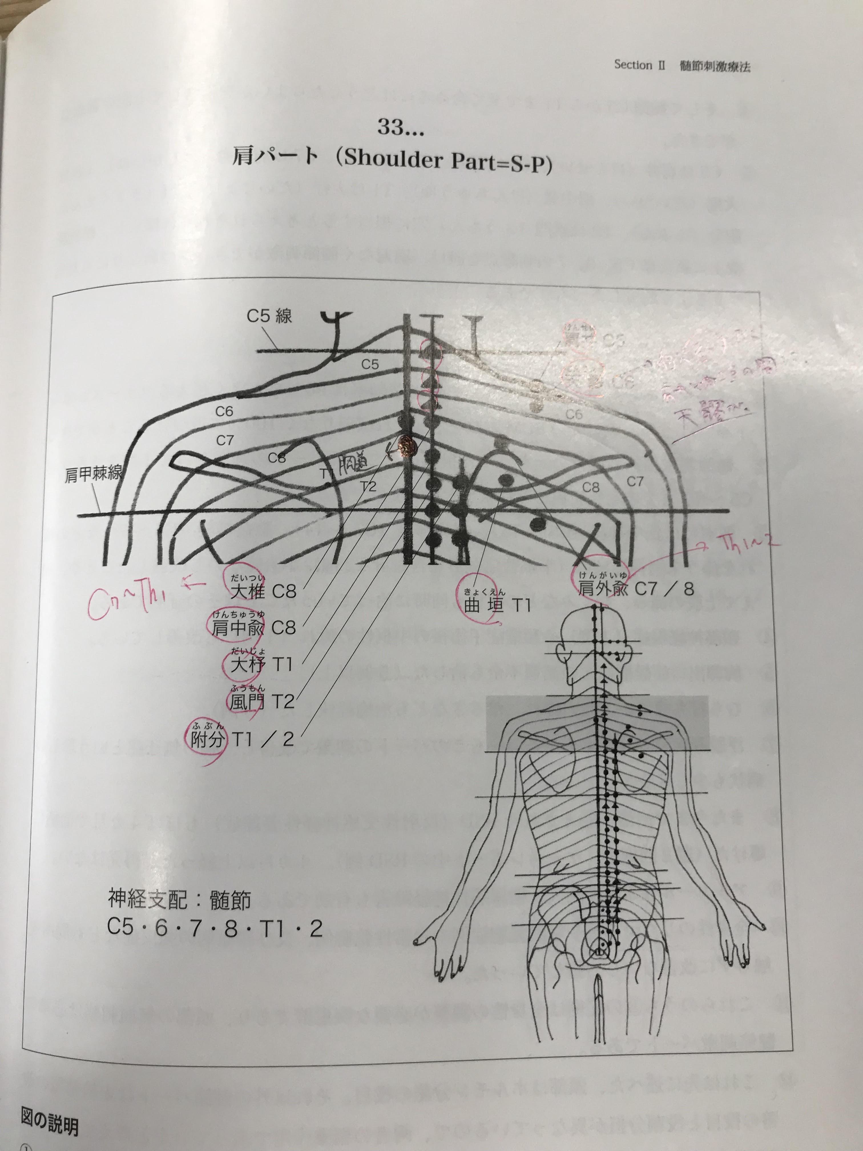 肩パート .jpg
